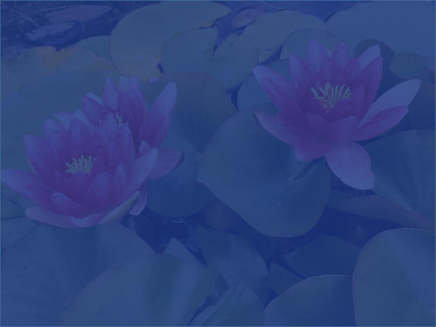 Ateliers méditation pleine conscience